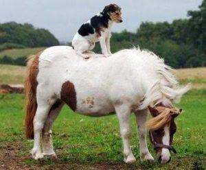 paardenhond